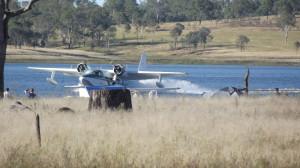 Mallard landing on Lake Barambah
