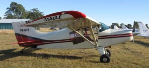 This lovely Maule is a regular at Angelfield